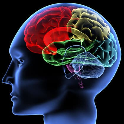 Brain in digital 3D