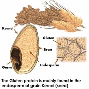 gluten grain protein chart