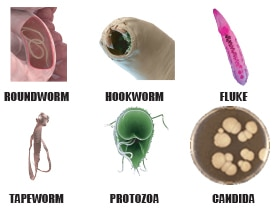 types of parasites killed during a parasite cleanse