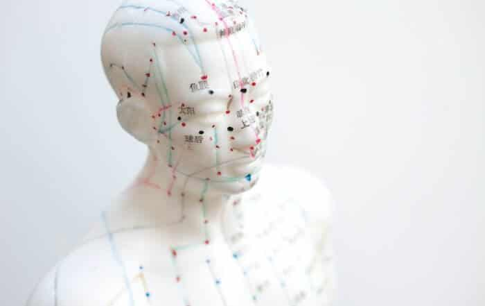 mannequin with acupuncture meridians and points