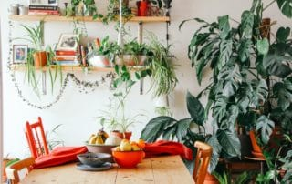 plants in dining room to improve air quality