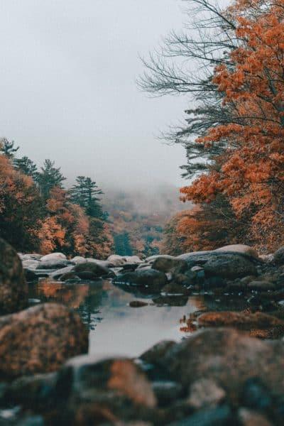 autumn scene for metal element