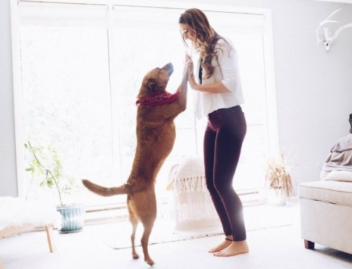 Pets as Mirrors: Your dog knows you're stressed before you do